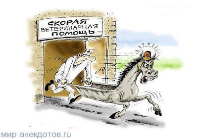 анекдот про ветеринара