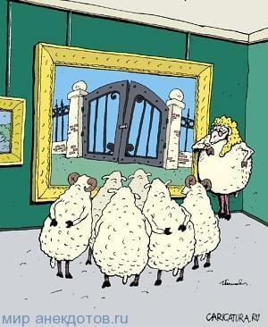 анекдот про овцу