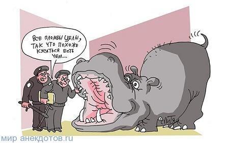анекдот про бегемота