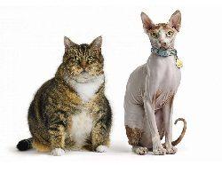 Смешные клички котов