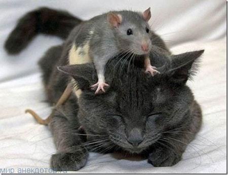 Смешные фото с котами