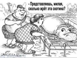 Смешные анекдоты про бегемота