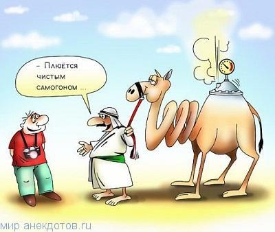 Прикольные анекдоты про верблюда