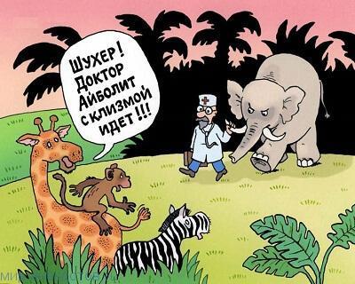 Забавные анекдоты про животных