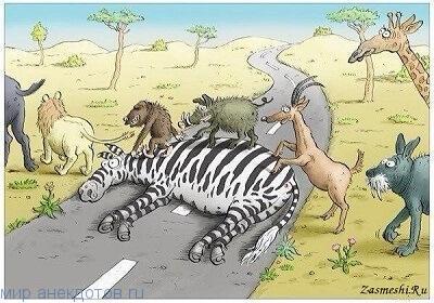 Прикольные анекдоты про зебру