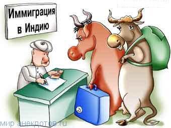 Лучшие анекдоты про корову