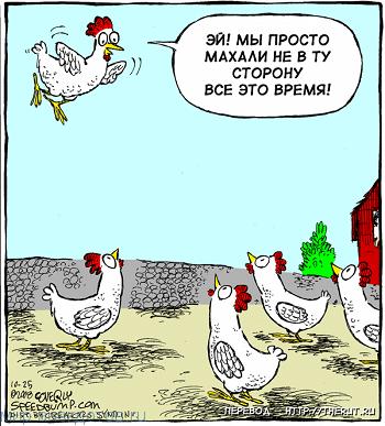 Смешные анекдоты про курицу