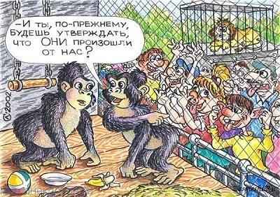 Лучшие анекдоты про обезьяну