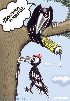 Забавные анекдоты про птиц