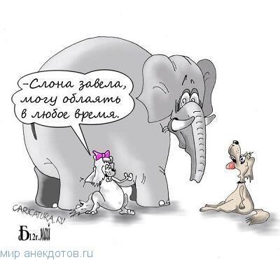 Смешные анекдоты про слона