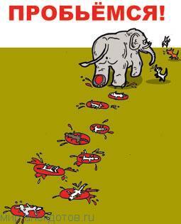 Забавные анекдоты про слона