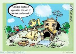 Забавные анекдоты про собак
