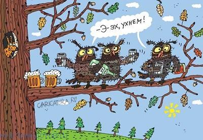 Смешные анекдоты про сову