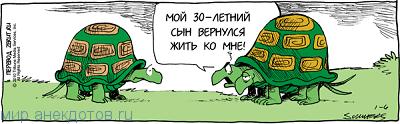 Веселые анекдоты про черепаху