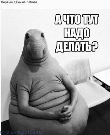 Мемы Ждун