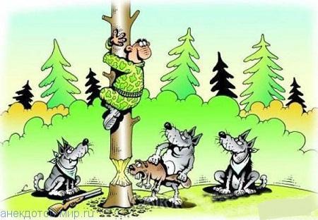 Забавные анекдоты про охотников