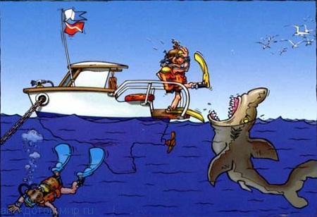 Смешные анекдоты про акул