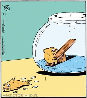 Забавные анекдоты про рыбу