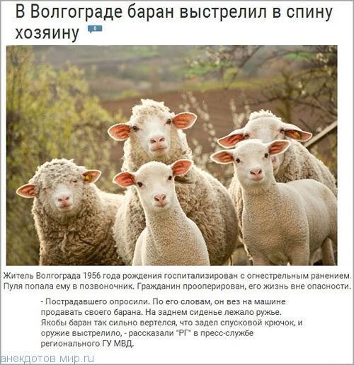 Смешные новости России и мира (фото)