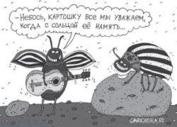 Анекдоты про жуков