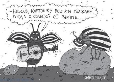 анекдот про жуков