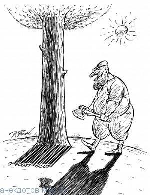 смешной анекдот про дерево
