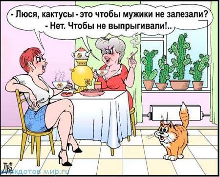 Анекдоты про кактусы