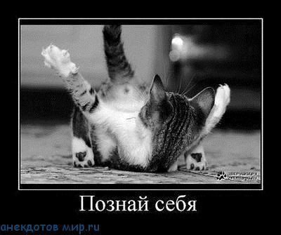 демотиватор про кошек