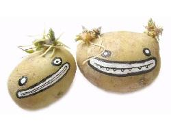 Частушки про картошку