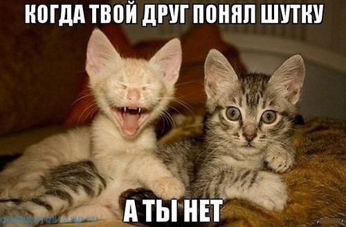 фото прикол про друзей