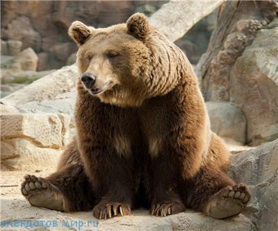 Фото приколы про медведя
