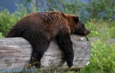 фото прикол про медведя