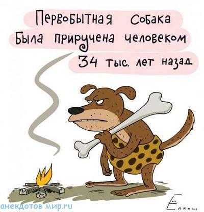 Читать бесплатно анекдоты про животных