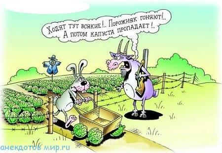 Самые смешные анекдоты про зайцев