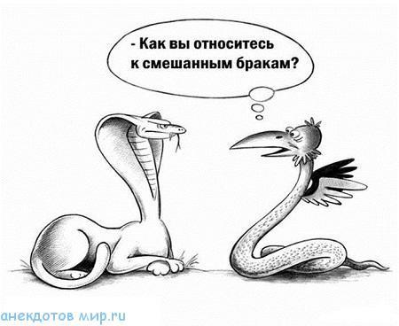 смешной до слез анекдот про змею