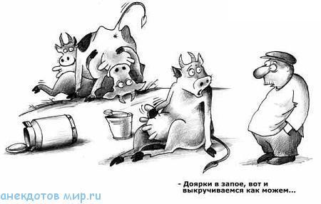 новый анекдот про коров