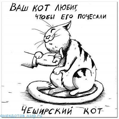 очень смешной анекдот про кота