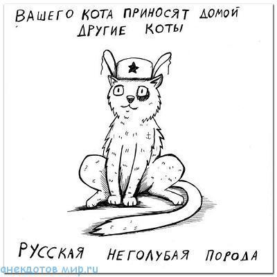 читать бесплатно анекдот про кота