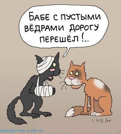 смешной до слез анекдот про котов