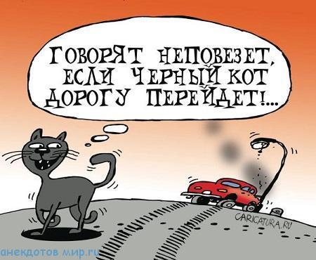 самый смешной анекдот про котов