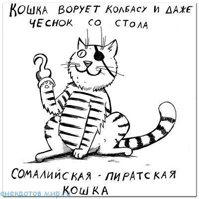 Новые анекдоты про кошек