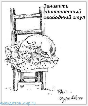 читать бесплатно анекдот про кошку