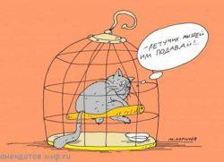 Самые смешные анекдоты про кошек
