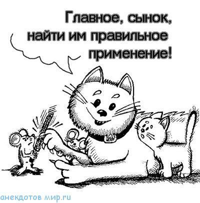 Короткие анекдоты про кошек