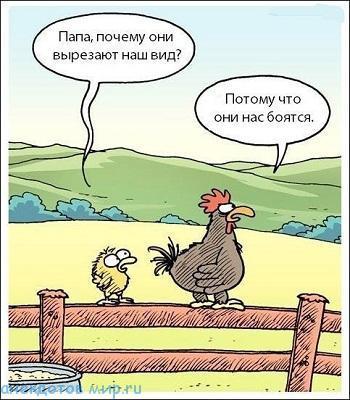 смешной до слез анекдот про кур