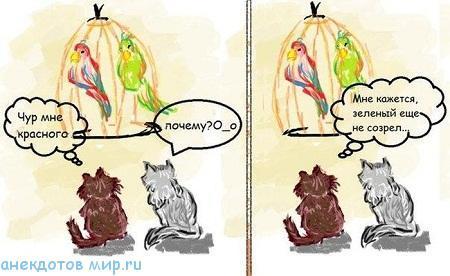 очень смешной анекдот про попугая