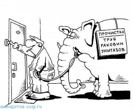 Анекдот про слона тесты как влюбиться в парня