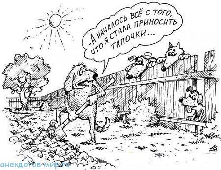 короткий анекдот про собак
