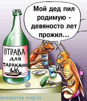 свежий анекдот про тараканов
