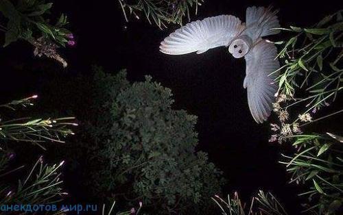 фото прикол про ночь
